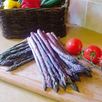 Asparagus Crowns Stewarts Purple