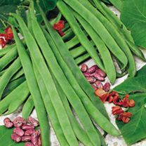 Pea & Bean Seed Offer