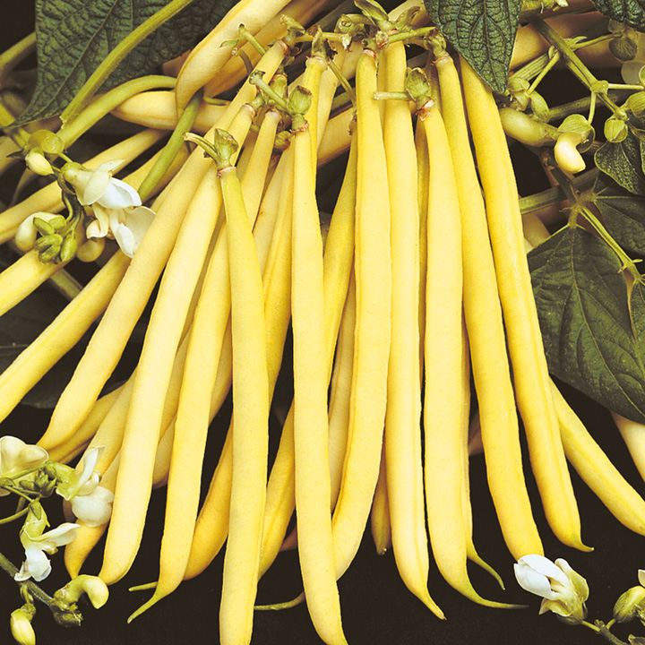 Dwarf French Bean Seeds - Valdor
