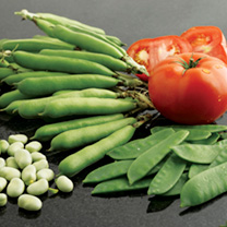 Broad Bean Seeds - Listra