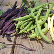 Climbing French bean Seeds - Mix