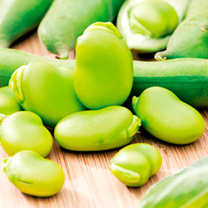 Broad Bean Seeds - Imperial Green Longpod