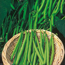French Bean Seeds - Continuity Duo Pack