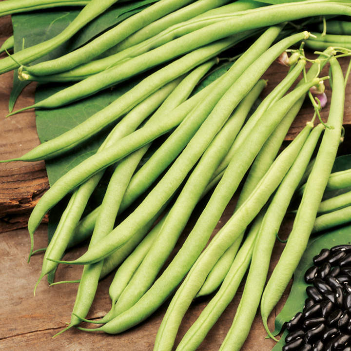 Climbing French Bean Seeds - Cobra