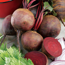 Boltardy is a unique beetroot that's resistant to bolting (running to seed). It's got a rich colour, is of superb quality and can be sown earlier than