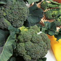 Broccoli Green Sprouting - ORGANIC SEEDS