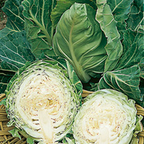 Cabbage Pixie Seeds