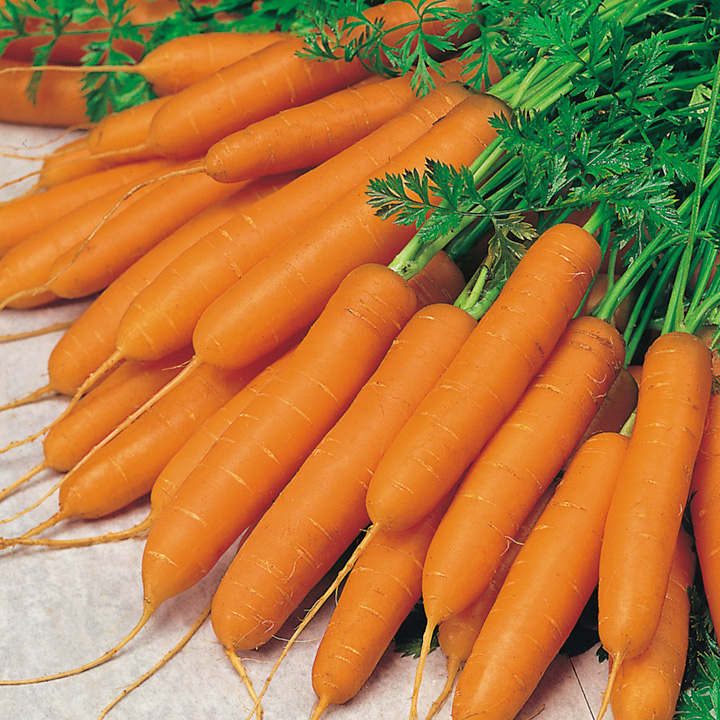 Value Vegetable Seed Collection - Carrot Diversity
