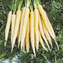 Carrot Creme De Lite F1 Seeds
