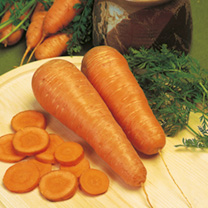 Carrot Seeds - Autumn King 2 - Triple Pack