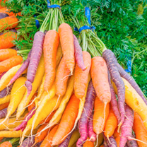 Carrot Seeds - Rainbow