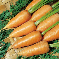 Carrot Seeds - Chantenay Red Cored Royal 2 - Triple Pack