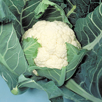 Cauliflower Candid Charm Seeds