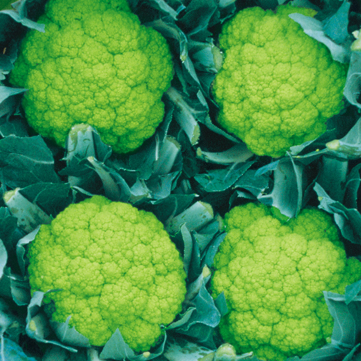 Cauliflower Trevi F1 Seeds