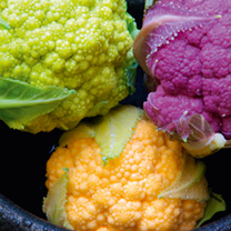 Cauliflower Plants - Tri-colour Collection