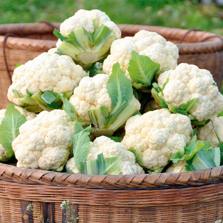 how to cut cauliflower from the plant