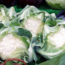 Cauliflower Plants - Autumn/Winter Continuity Collection
