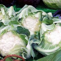 Cauliflower Plants - Autumn/Winter Continuity Collection