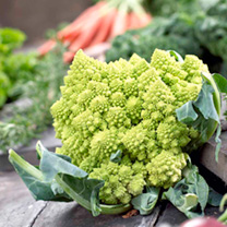 Cauliflower Plants - Romanesco Continuity Collection