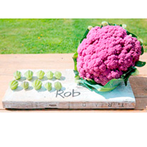 Cauliflower Plants - Purple Graffiti