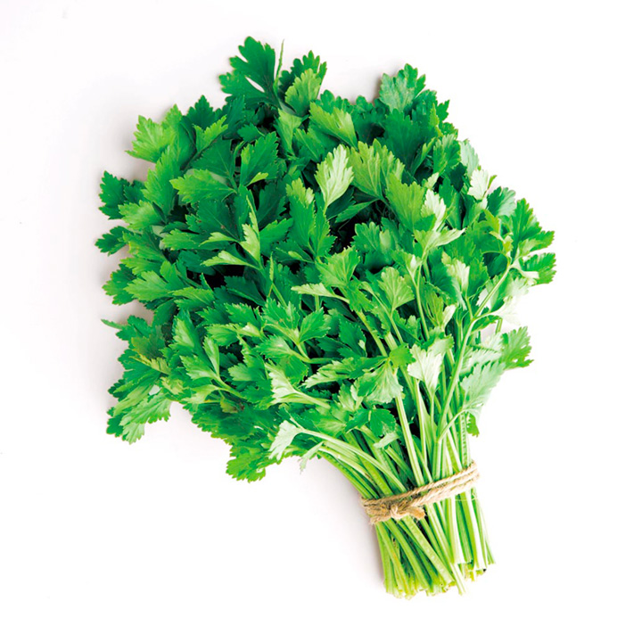 Herb Plant - Celery Leaves