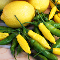 Pepper Chilli Plants - Peruvian Lemon Drop