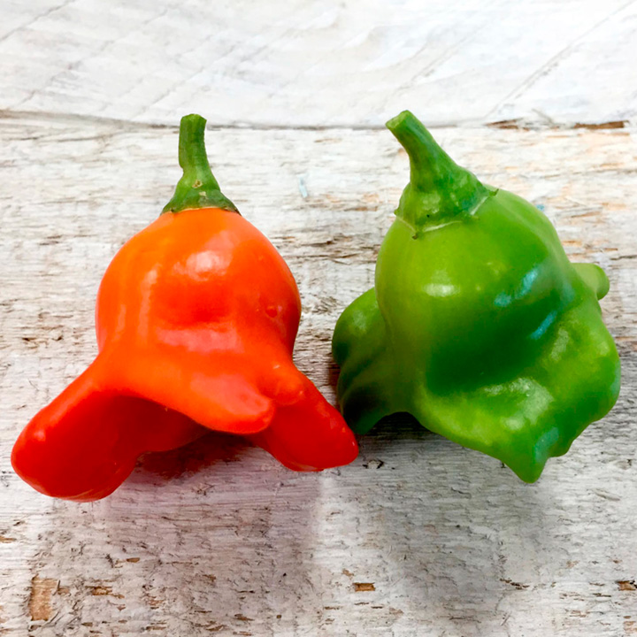 Pepper Chilli Plants - Bishop's Crown