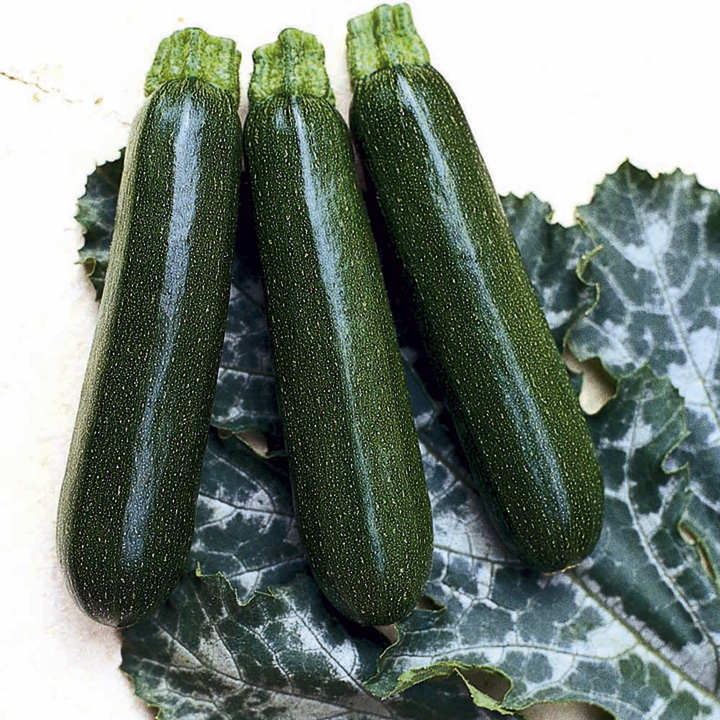 Courgette Seeds- Tosca F1