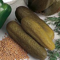 Cucumber Venlo Pickling (Gherkin) Seeds