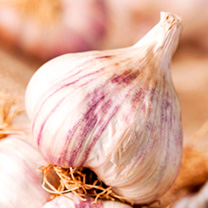 Garlic Bulbs - Autumn Planting Collection
