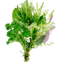 Herb Plants - Bouquet Garni