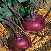 Kohl Rabi Purple and White Mix Seeds