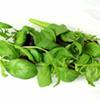 Leaf Salad Seeds - Italian