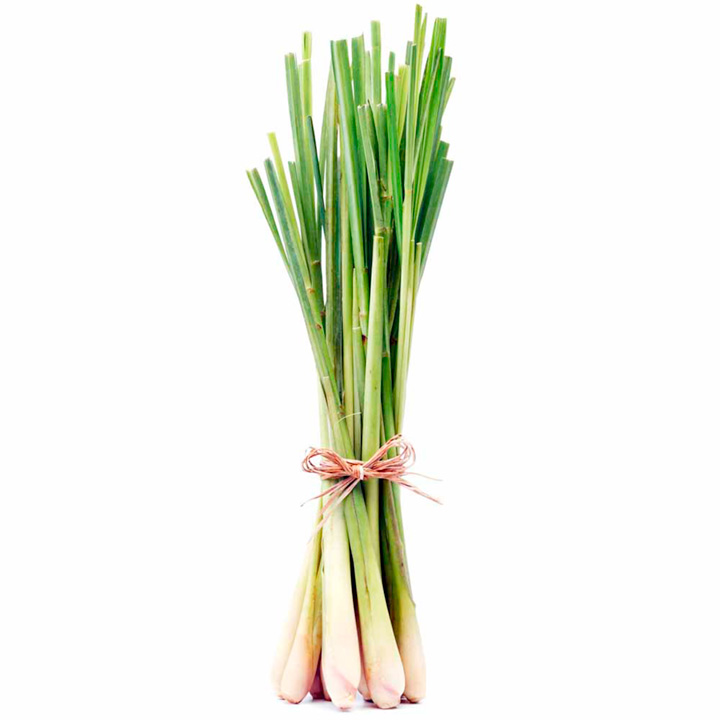Herb Plant - Lemon Grass