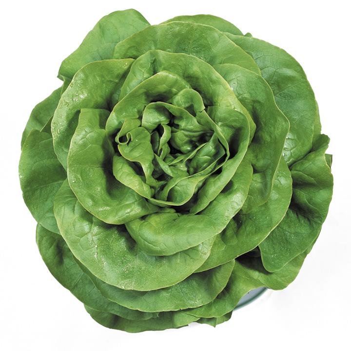 Lettuce Rosetta Seeds