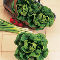 Lettuce Little Gem Seeds
