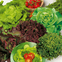 Lettuce Plants - Mix
