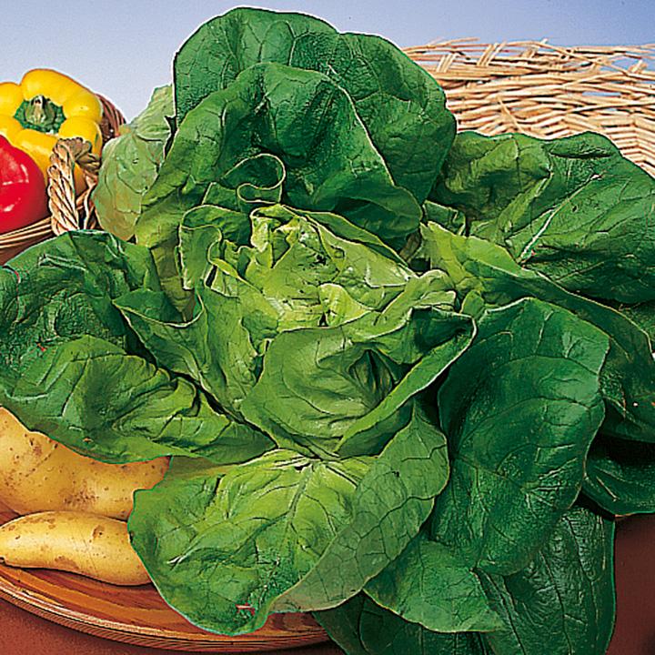 Lettuce Seeds - Valdor