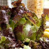 Lettuce Seeds - Red Iceberg
