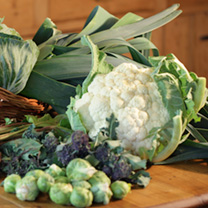 Autumn Vegetable Brassica Plants - Collection