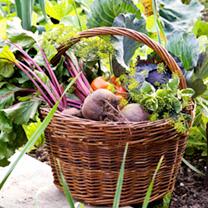 Autumn Vegetable Plants - Collection