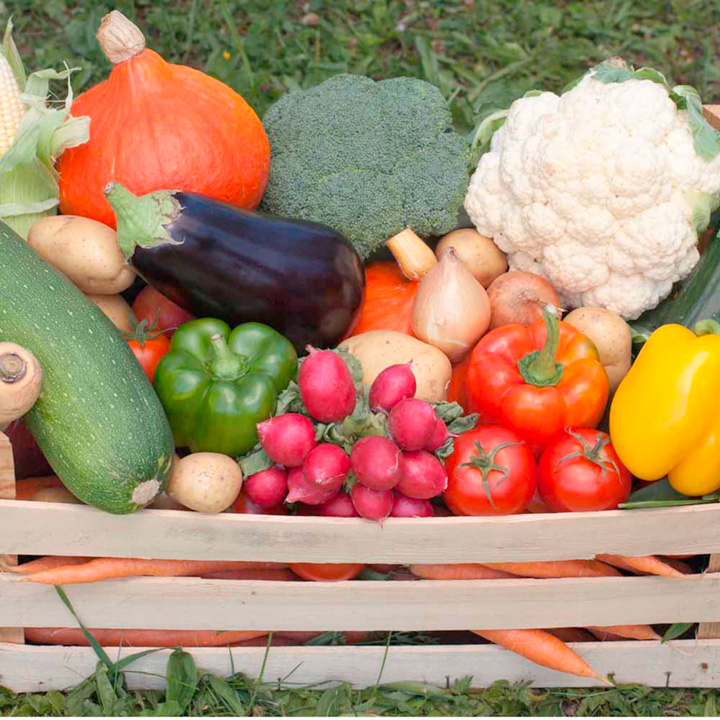 Vegetable Plants - Special Offer Collection