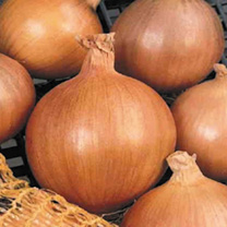 Onion Sets - Esther