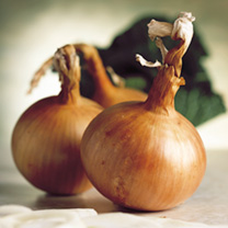 Onion (Bulb) Hytech F1 Seeds