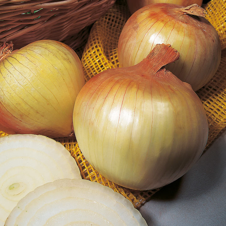 Onion Sets - Senshyu Yellow