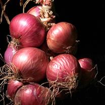 Onion Seeds - Fire King F1