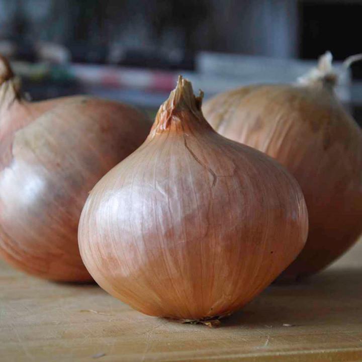Onion Sets - Rosanna