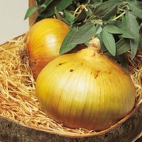 Onion, Shallot and Garlic Collection