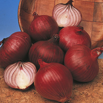Onion (Bulb) Red Baron Seeds