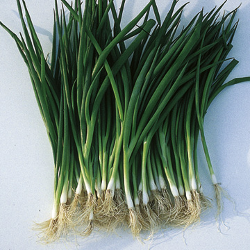 Onion (Spring) Salad Laser Seeds